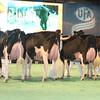 SwissExpo2017_Holstein_L32A1199