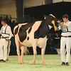 SwissExpo2017_Holstein_L32A1165