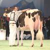 SwissExpo2017_Holstein_IMG_9527