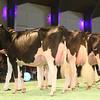 SwissExpo2017_Holstein_IMG_9703