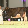 SwissExpo2017_Holstein_KIMG_0024