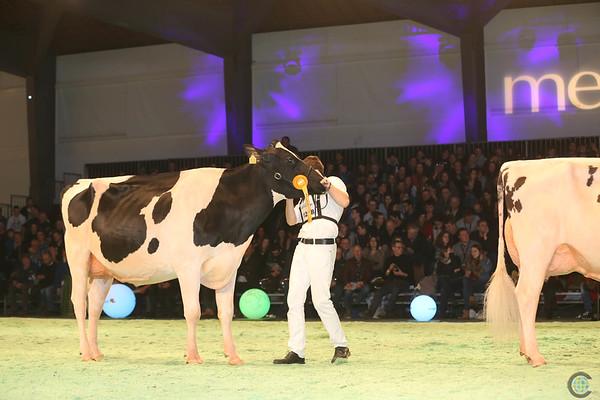SwissExpo2017_Holstein_IMG_9654