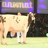 SwissExpo2017_Holstein_IMG_9677