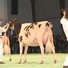 SwissExpo2017_Holstein_IMG_9630