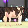 SwissExpo2017_Holstein_IMG_9978