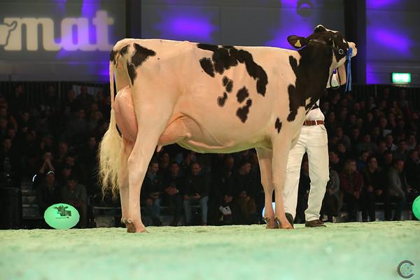 SwissExpo2017_Holstein_L32A1113