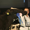 SwissExpo2017_Holstein_L32A1225