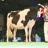 SwissExpo2017_Holstein_L32A1057