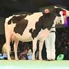 SwissExpo2017_Holstein_L32A1060