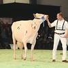 SwissExpo2017_Holstein_L32A1046