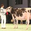 SwissExpo2017_Holstein_IMG_9636
