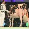 SwissExpo2017_Holstein_L32A1101