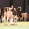 SwissExpo2017_Holstein_IMG_9613