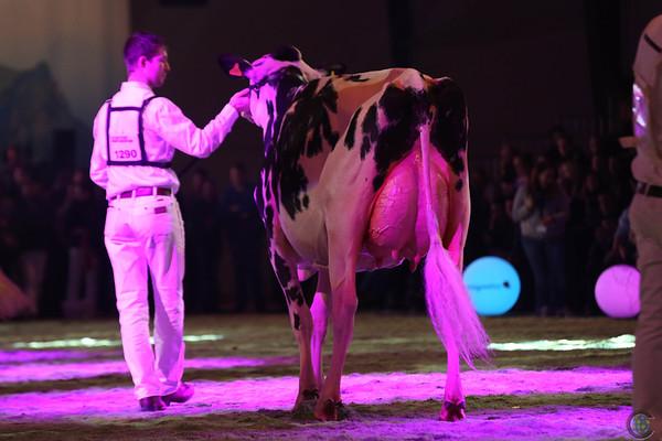 SwissExpo2017_Holstein_L32A1341
