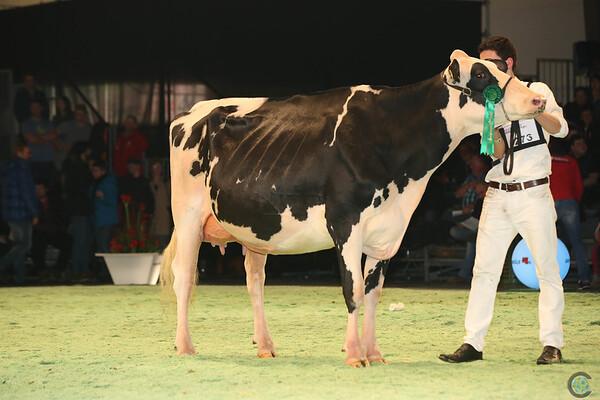 SwissExpo2017_Holstein_L32A1115