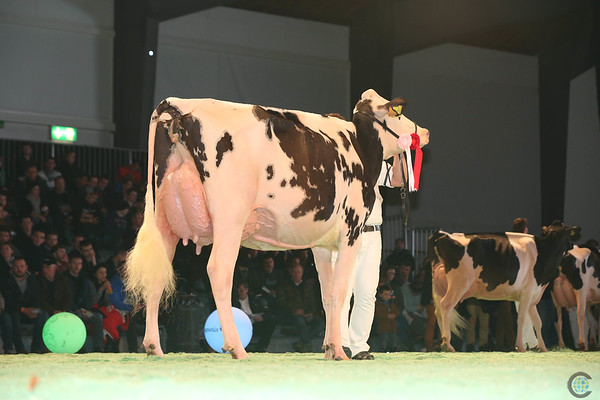SwissExpo2017_Holstein_L32A1166