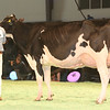 SwissExpo2017_Holstein_KIMG_0025