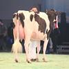 SwissExpo2017_Holstein_IMG_9506