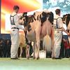 SwissExpo2017_Holstein_L32A1082