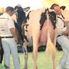 SwissExpo2017_Holstein_L32A1134