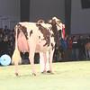 SwissExpo2017_Holstein_IMG_9666