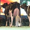 SwissExpo2017_Holstein_L32A1202