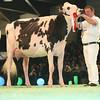 SwissExpo2017_Holstein_L32A1176