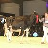 SwissExpo2017_Holstein_IMG_9728