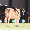 SwissExpo2017_Holstein_IMG_9619