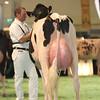 SwissExpo2017_Holstein_L32A1071