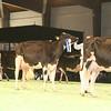 SwissExpo2017_Holstein_IMG_9729