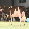 SwissExpo2017_Holstein_KIMG_0012