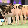 SwissExpo2017_Holstein_IMG_9563