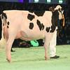 SwissExpo2017_Holstein_L32A1053