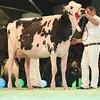 SwissExpo2017_Holstein_L32A1178