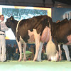 SwissExpo2017_Holstein_L32A1200