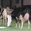 SwissExpo2017_Holstein_L32A1342