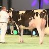 SwissExpo2017_Holstein_IMG_9524