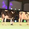 SwissExpo2017_Holstein_IMG_9624