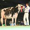 SwissExpo2017_Holstein_L32A1120