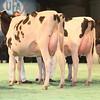 SwissExpo2017_Holstein_IMG_9545