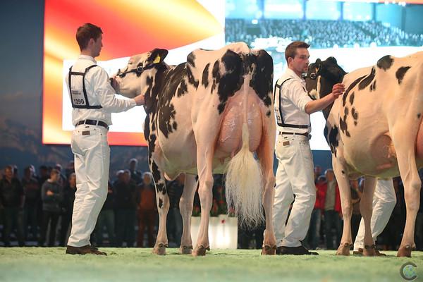 SwissExpo2017_Holstein_L32A1083