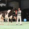 SwissExpo2017_Holstein_IMG_9963