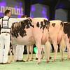 SwissExpo2017_Holstein_IMG_9566