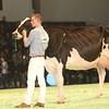 SwissExpo2017_Holstein_KIMG_0022