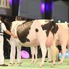 SwissExpo2017_Holstein_IMG_9773
