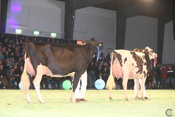 SwissExpo2017_Holstein_IMG_9673