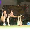 SwissExpo2017_Holstein_L32A1230