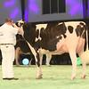 SwissExpo2017_Holstein_IMG_9536