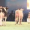 SwissExpo2017_Holstein_IMG_9520
